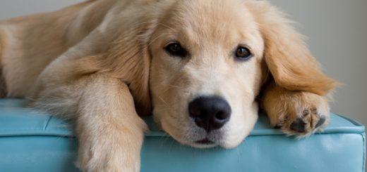 Chích ngừa dại muộn khi bị chó cắn có sao không?