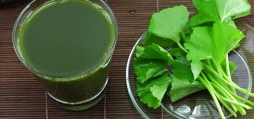 Sử dụng rau má trị nám da tại nhà