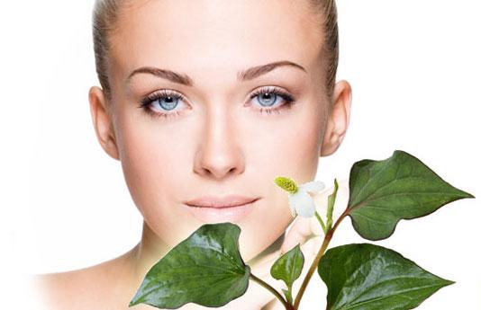 Cách trị nám da với các loại mặt nạ từ rau má, rau ngót, diếp cá, bắp cải
