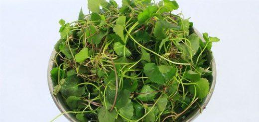 Top 2 cách trị mụn bằng rau má đơn giản
