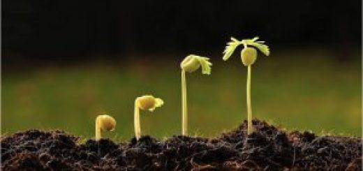 Hướng dẫn  cách Seeding trên Facebook toàn tập