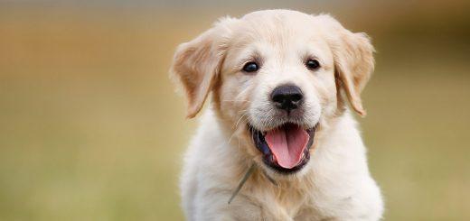 Bị chó cắn nhưng không chảy máu, không trầy, chỉ xước nhẹ có cần tiêm phòng