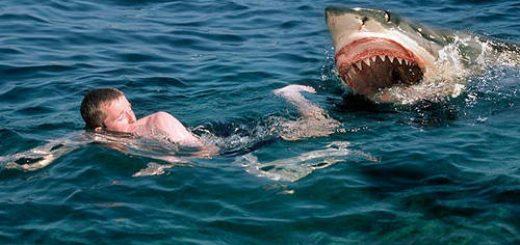 Khi bị cá mập tấn công phải làm gì?