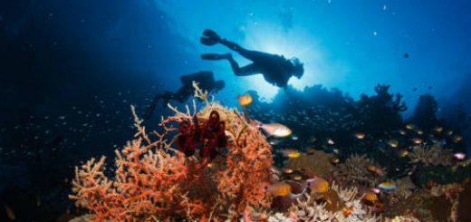 Hướng dẫn chụp ảnh dưới biển đẹp