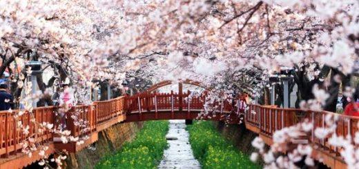 Mách bạn cách xin visa du lịch Hàn Quốc cho người mới
