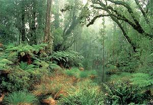 Tại sao mưa nhiều ở rừng?