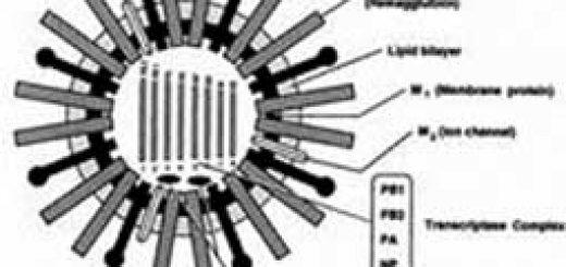 Tại sao virus cúm phát triển mạnh vào mùa đông?