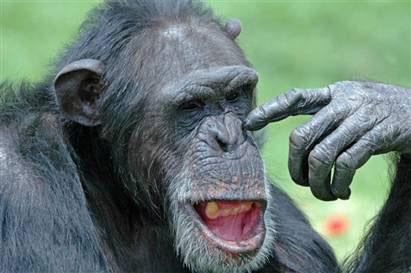 Tại sao người sống lâu hơn với khỉ?