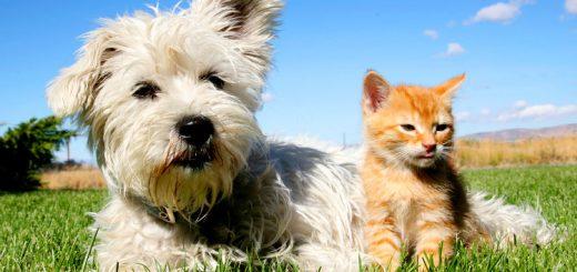 Tại sao chó lại ghét mèo?