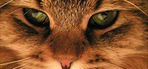 Tại sao mắt mèo lại thay đổi được?