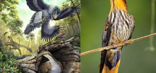Tại sao chim không có răng?